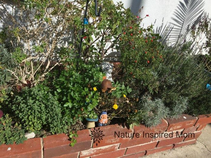 natureinspiredmom-herbs1