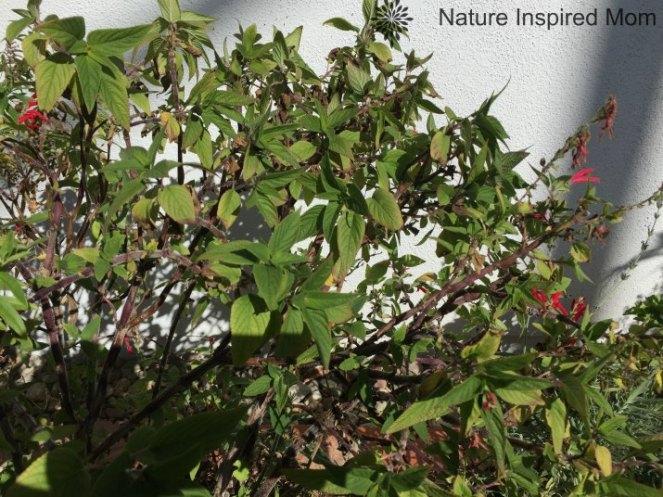 natureinspiredmom-herbs6