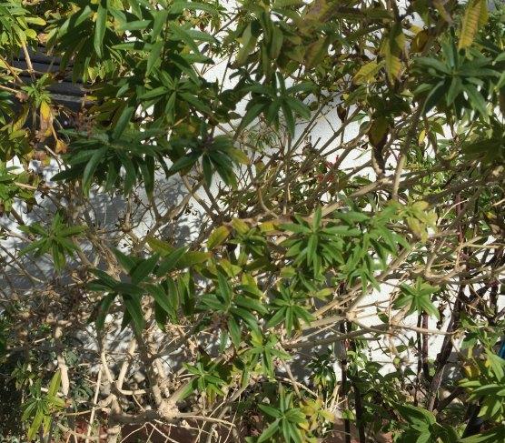 natureinspiredmom-herbs7