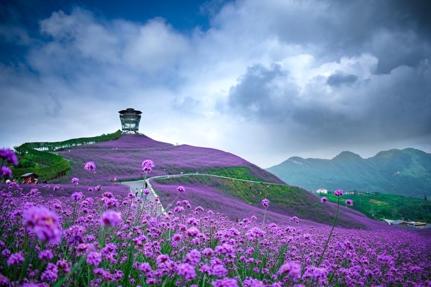 Guizhou Tongzi