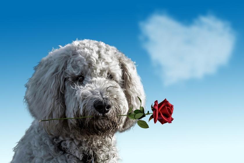 valentines-day-3135789_1920