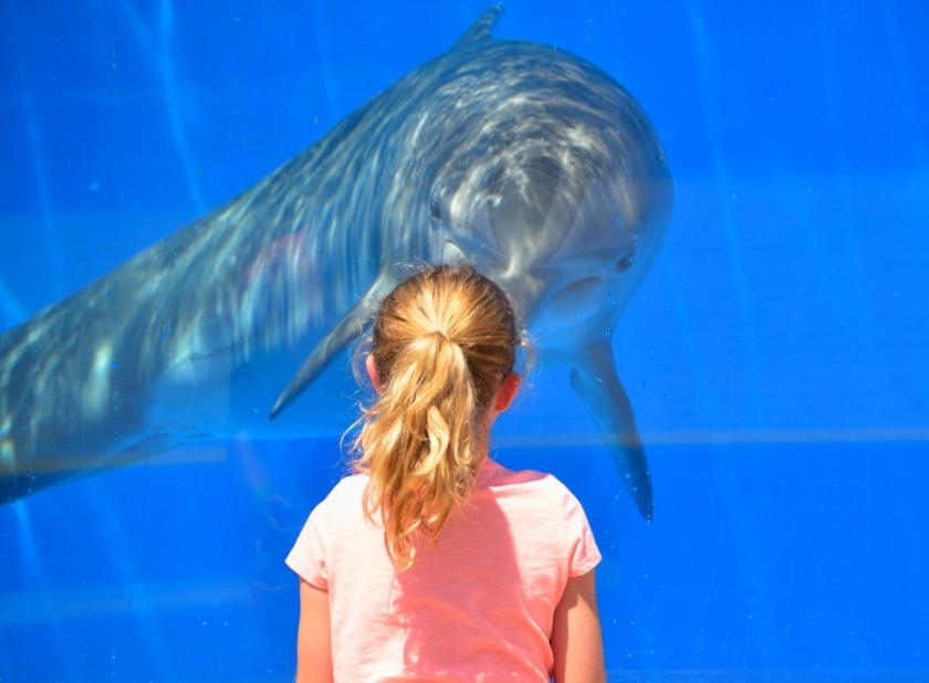 dolphin-1548448_1920